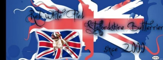 Staffordshire Bullterrier Kennel  Red White Pied Banner